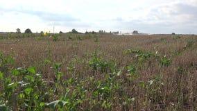 Rolnik kiści prowadnikowy ciągnikowy pole odchwaszcza z herbicydem Ostrości zmiana 4K zdjęcie wideo