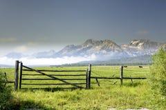 Rolnik krowy w polu z górami Zdjęcie Stock