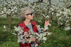 Rolnik lub agronom w kwitnąć śliwkowego sad Zdjęcia Royalty Free