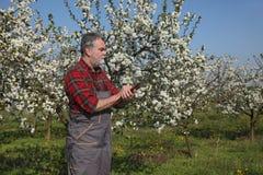 Rolnik lub agronom w kwitnąć śliwkowego sad Obraz Stock