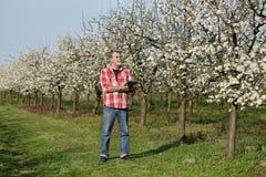 Rolnik lub agronom w kwitnąć śliwkowego sad Zdjęcie Stock