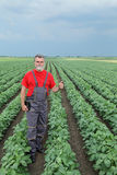 Rolnik lub agronom w soi polu Obrazy Stock