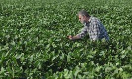 Rolnik lub agronom w soi polu Fotografia Stock