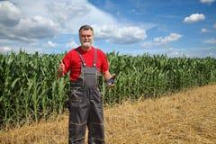 Rolnik lub agronom w zielonym kukurydzanym polu obraz royalty free