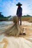 Rolnik młóci ryż zdjęcia royalty free
