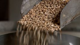 Rolnik mleje mąkę i piec chleb w Rosyjskim piekarniku zbiory wideo