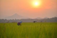Rolnik na gospodarstwie rolnym obraz royalty free