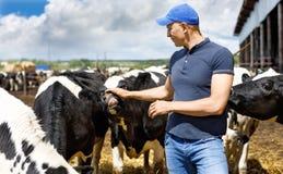 Rolnik na krowy gospodarstwie rolnym wokoło stada fotografia royalty free