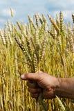 Rolnik na polu. Obrazy Stock