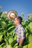Rolnik na tabacznym polu obraz royalty free