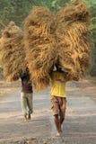 Rolnik niesie ryż od uprawia ziemię do domu Obrazy Royalty Free