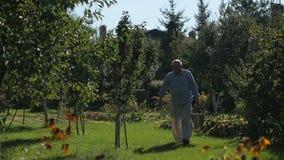 Rolnik ocenia czerwonego jabłka w jego ogródzie zbiory wideo