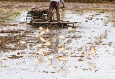Rolnik orze z ciągnikiem w jego gospodarstwie rolnym ar i ptakach Zdjęcia Stock
