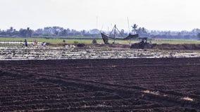 Rolnik orze ziemię na jego ciągniku, Asia Tajlandia Fotografia Royalty Free