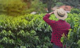 Rolnik patrzeje kawowej plantaci pole z kapeluszem obraz stock