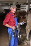 Rolnik pracuje z nabiał krowami obrazy stock
