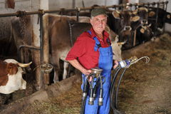 Rolnik pracuje z nabiał krowami zdjęcia stock