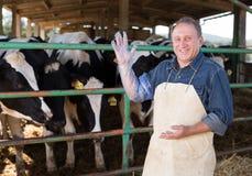 Rolnik przygotowywa dla sztucznego zapłodnienia krowy obrazy stock