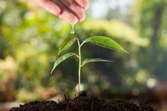Rolnik ręka nawadnia młodej rośliny obrazy royalty free