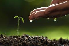 Rolnik ręka nawadnia młodej rośliny na naturze zdjęcia royalty free