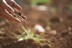 Rolnik ręki Nalewa ziemię Na ziemi Fotografia Stock