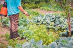 Rolnik rozpylał medycyny dla warzyw w ogródzie zdjęcie royalty free