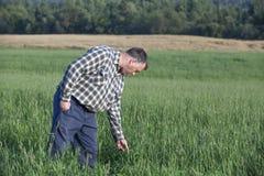 Rolnik sprawdza jego uprawy Zdjęcia Royalty Free