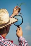 Rolnik sprawdza kukurudzy Zdjęcie Stock