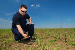 Rolnik Sprawdza kukurudzy atakującej świrzepą fotografia royalty free
