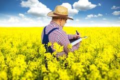 Rolnik sprawdza rapeseed zdjęcie stock