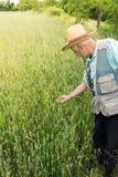 Rolnik sprawdza uprawy Zdjęcia Stock