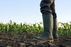 Rolnik stoi w kukurydzanym polu w gumowych butach Zdjęcie Stock
