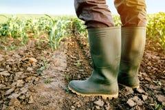 Rolnik stoi w kukurydzanym polu w gumowych butach Fotografia Stock