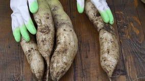Rolnik trzyma biologicznego produkt czoło rzodkwie, ręki i warzywa zanieczyszczający z ziemią, 30-06 karabinu zakresu na camo tle zbiory