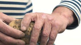 Rolnik trzyma biologicznego produkt grule, ręki i grule plamiący z ziemią, Pojęcie biologia, życiorys zbiory