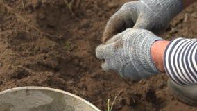 Rolnik trzyma biologicznego produkt grule, ręki i grule plamiący z ziemią, Pojęcie biologia, życiorys zbiory wideo