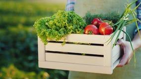 Rolnik trzyma drewnianego pudełko z setem świezi warzywa z sveogo polem Żywność organiczna od małego gospodarstwa rolnego zdjęcie wideo