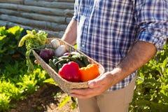 Rolnik trzyma kosz świezi warzywa w winnicy Obrazy Stock