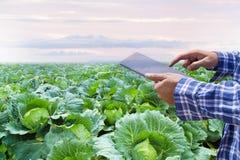 Rolnik używa cyfrową pastylkę sprawdza w rolniczym dorośnięciu Obrazy Royalty Free