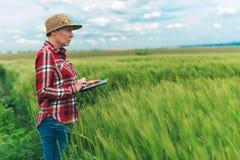 Rolnik używa cyfrową pastylkę w pszenicznym uprawy polu zdjęcia royalty free