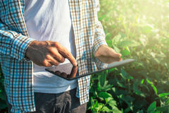 Rolnik używa cyfrowego pastylka komputer w kultywować soj uprawach Obrazy Royalty Free