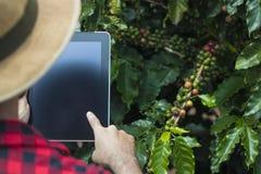 Rolnik używa cyfrowego pastylka komputer w kultywującej kawy pola plantaci zdjęcia royalty free