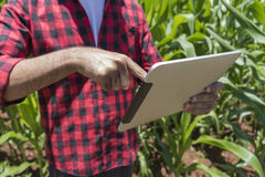 Rolnik używa cyfrowego pastylka komputer w kultywującej kukurydzanego pola plantaci obraz stock