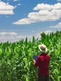 Rolnik używa cyfrowego pastylka komputer w kultywującym kukurydzanym polu Fotografia Royalty Free