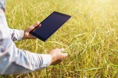 rolnik używa pastylki technologię sprawdza ryżowego dorośnięcie obrazy stock