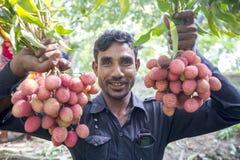 Rolnik utrzymuje świeżych lychees i bunding do bubla w miejscowego rynku przy ranisonkoil, thakurgoan, Bangladesz Zdjęcia Stock