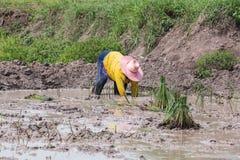 Rolnik w irlandczyka polu Zdjęcie Stock