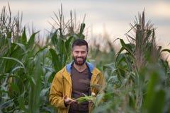 Rolnik w kukurydzanym polu Zdjęcie Royalty Free