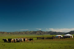 Rolnik w Mongolia obraz royalty free