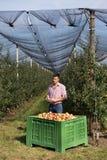 Rolnik w nowożytnym jabłczanym sadzie zdjęcie royalty free